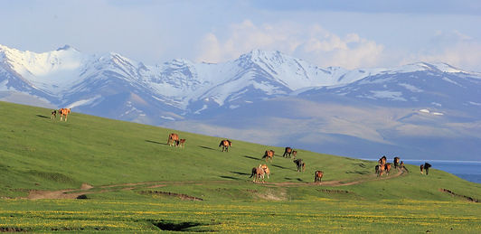 photographe francais french photographer travel photography photographie voyage landscape paysage paysaje scenery scenic view nature animals animaux animal fauna wildlife montagne montagnes mountain mountains horses snow capped lac lake song kol kul kyrgyzstan central asia