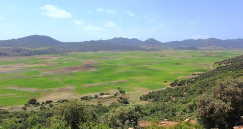 Environs de Taza, Maroc