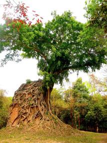 Banlieue de Siem Reap, Cambodge