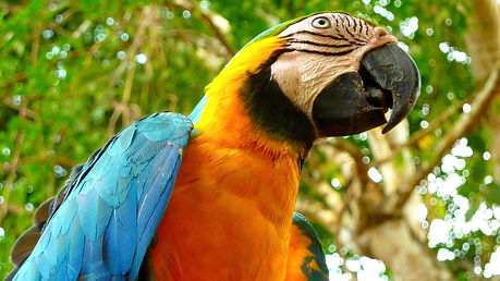 photographe francais french photographer travel photography photographie voyage angle beauty composition perspective light colorful colourful couleurs scenic view nature animals animaux animal fauna wildlife bird oiseau portrait close up central america amerique central costa rica pura vida perrot perroquet blue yellow bleu jaune