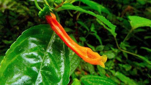 réserve biologique de Monteverde, Costa Rica
