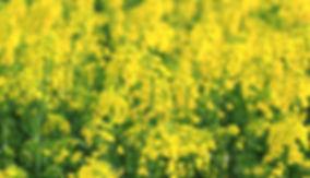 photographe no filter francais parisien adventure parisian photographer travel traveler photography photographie french voyage visit voyageur angle home tour brice retailleau quintessence de voisinage bright website backpack life backpacker beauty best composition perspective pure light colorful colourful couleurs scenic view point of de vue viewpoint trip tour du monde around the world earth wonderful beautiful gorgeous amazing journey destination tourisme tourism backpacking , été summer spring printemps outdoor outdoors outside exterieur exterior nature close up macro countryside campagne champ champs field fields europe france centre indre et loir issoudun condé colza yellow jaune