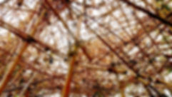 photographe no filter francais parisien parisian photographer travel traveler photography photographie french voyage visit voyageur angle home tour brice retailleau quintessence de voisinage bright website backpack life backpacker beauty best composition perspective pure light colorful colourful couleurs scenic view point of de vue viewpoint trip tour du monde around the world earth wonderful beautiful gorgeous amazing journey destination tourisme tourism backpacking , été summer spring printemps outdoor outdoors outside exterieur exterior  urban urbain ville rue street architecture building style design construction structure sculpture art artwork display installation bambou bamboo usa new york met roof rooftop metropolitan museum of art