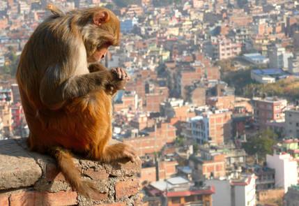 Katmandou, Népal