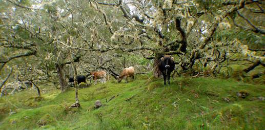Forêt de Tamarhaut, La Réunion