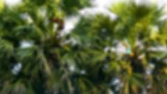 photographe no filter francais parisien parisian photographer travel traveler photography photographie french voyage visit voyageur angle home tour brice retailleau quintessence de voisinage bright website backpack life backpacker beauty best composition perspective pure light colorful colourful couleurs scenic view point of de vue viewpoint trip tour du monde around the world earth wonderful beautiful gorgeous amazing journey destination tourisme tourism backpacking , été summer spring printemps outdoor outdoors outside exterieur exterior tree trees flora flore arbre arbres vegetation flore forest foret close up macro texture palmtrees palm palmier palmiers people street locaux local portrait countryside campagne asia asie asian close up cambodge cambodia