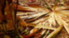 photographe no filter francais french photographer travel traveler photography photographie voyage voyageur angle home brice retailleau quintessence de voisinage bright website backpack backpacking backpacker beauty best composition perspective pure light colorful colourful couleurs scenic view point of de vue viewpoint trip tour du monde around the world earth wonderful beautiful gorgeous amazing journey destination tourisme tourism backpacking , été summer outdoor outdoors nature landscape paysage paysaje scenery tree trees flora flore arbre arbres vegetation flore animals animaux animal fauna wildlife nature giant leaf feuille géante coati koati central america amerique centrale latina guatemala tikal unesco