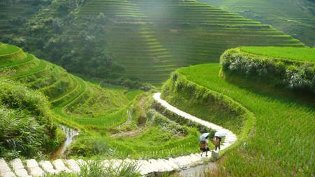 Dragon's Backbone Rice Terraces (Longsheng County), Guangxi, China