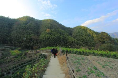 Forêt de bambous de Mukeng, Anhui, Chine