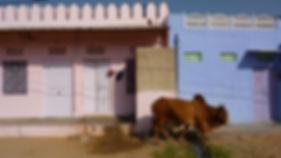 photographe no filter francais parisien parisian photographer travel traveler photography photographie french voyage visit voyageur angle home tour brice retailleau quintessence de voisinage bright website backpack life backpacker beauty best composition perspective pure light colorful colourful couleurs scenic view point of de vue viewpoint trip tour du monde around the world earth wonderful beautiful gorgeous amazing journey destination tourisme tourism backpacking , été summer spring printemps outdoor outdoors outside exterieur exterior cityscape city urban urbain ville rue street architecture building style design construction structure facade front buildings skyline animals animaux animal fauna faune wildlife nature asia asie asian india inde indian rajastan rajasthan pushkar cow cows sacred vache sacrée