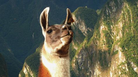 Macchu Pichu, Pérou