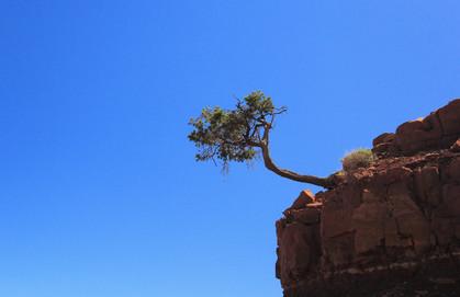Grand Canyon NP, Arizona, USA