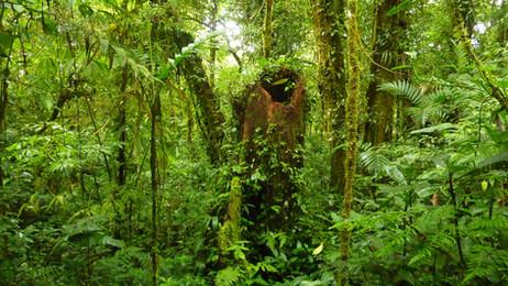 Carretera a Reserva de Monteverde, Provincia de Puntarenas, Monteverde, Costa Rica