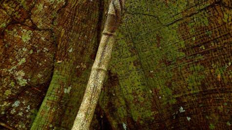 Refugio Nacional de Vida Silvestre Limoncito, Costa Rica