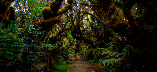 Forêt de Bélouve, La Réunion