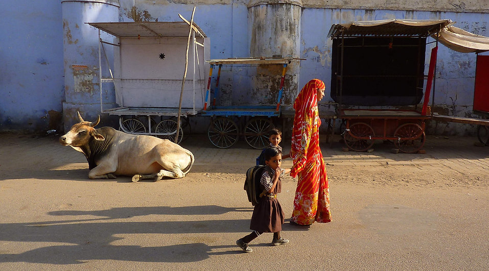 photograhe francais french photographer travel photography photographie voyage landscape paysage cityscape street people family cow india rajastan pushkar