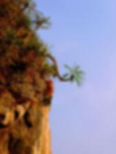 photographe no filter francais parisien parisian photographer travel traveler photography photographie french voyage voyageur angle home tour brice retailleau quintessence de voisinage bright website backpack life backpacker beauty best composition perspective pure light colorful colourful couleurs scenic view point of de vue viewpoint trip tour du monde around the world earth wonderful beautiful gorgeous amazing journey destination tourisme tourism backpacking ,  été summer outdoor outdoors nature landscape paysage paysaje scenery cliff montagne montagnes mountain mountains tree trees flora flore arbre arbres vegetation flore south east asia asian asie thailande thailand krabi tonsai railey beach plage
