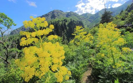 Réserve Naturelle de Sary-Chelek, Kyrgyzstan