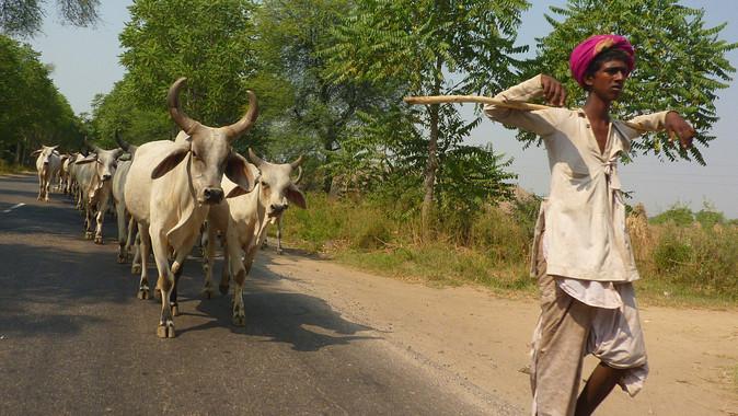 Bikaner, Rajasthan, Inde