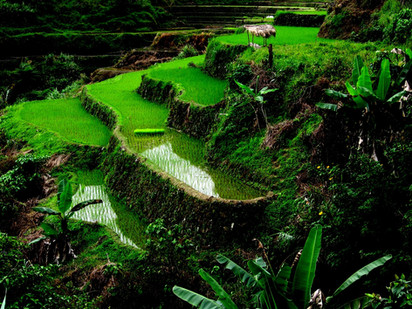 Banaue Rice Terraces, Luzon Island, Philippines