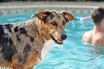 Dog Aggression and Behavior Training