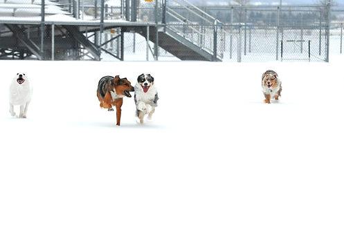 Rescue dog trainer