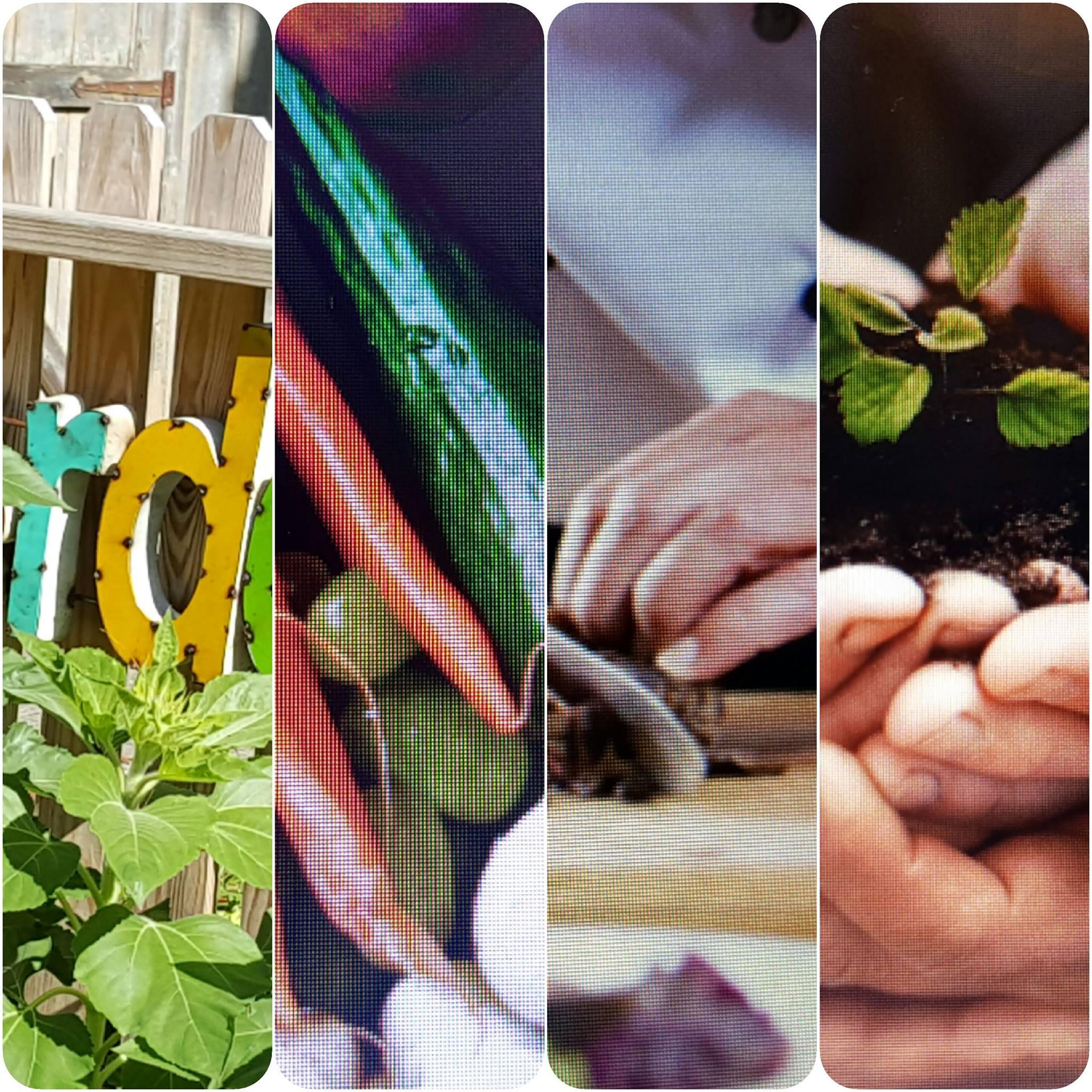 Creating Edible Environments