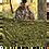 Thumbnail: Emco Camo Netting