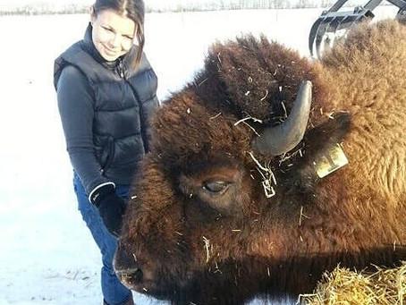 Canadian Bison & Spirit