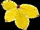 Dry Yellow Leaf