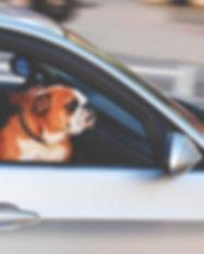 leaving_dog_unattended_in_car.jpg