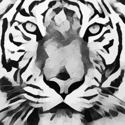 Ozelot Tiger