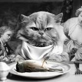 CAT DINER
