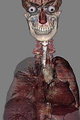 respiratory_background.jpg