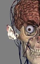 brain-ear.jpg