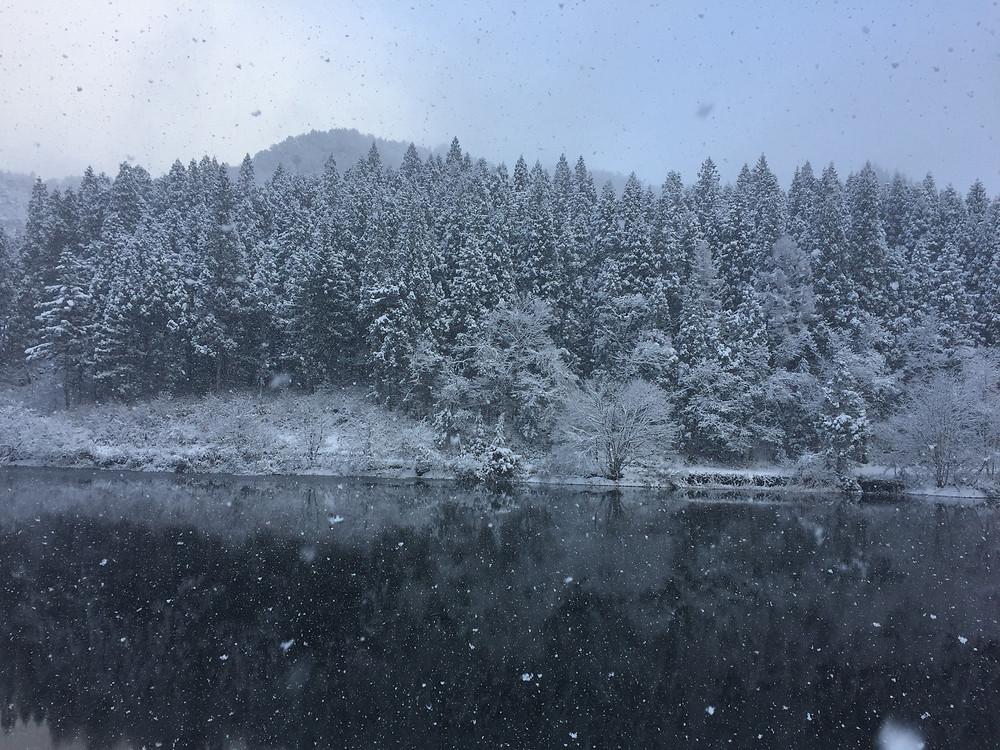雪の降り始めは何度見てもきれいです。(さ)撮影