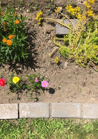 butterfly garden 1