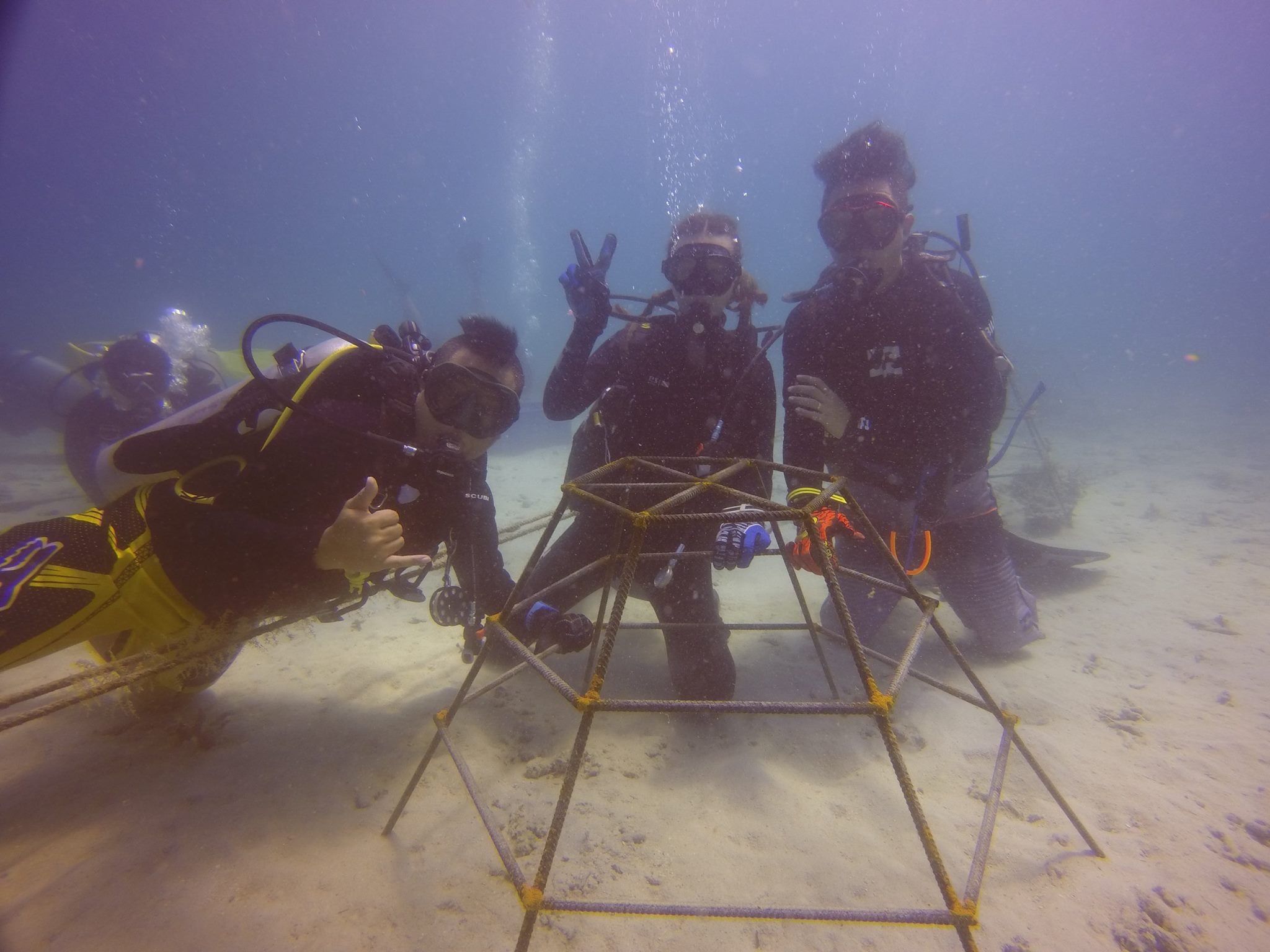 Coral planting project