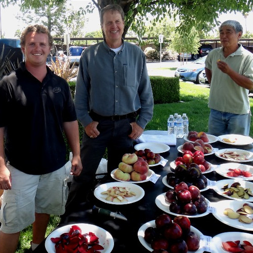 Boeta Terry Fruit Trial Table Truxtun 6-