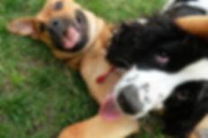Perros jugando guaderia canina