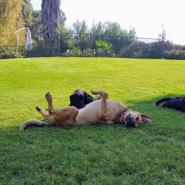 Perritos relajados