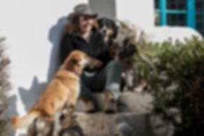 Perros felices adiestrmiento grupos  de perros socializacion