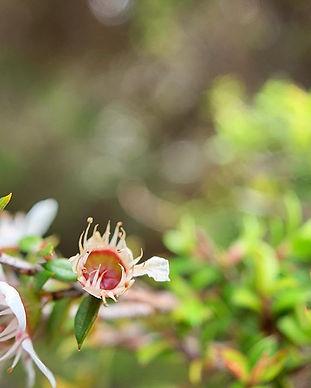 #obsessed #macro #flowers #nature #newze
