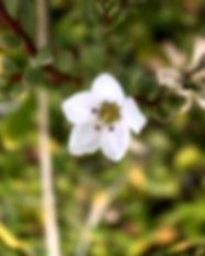 IMG_2522_edited_edited.jpg