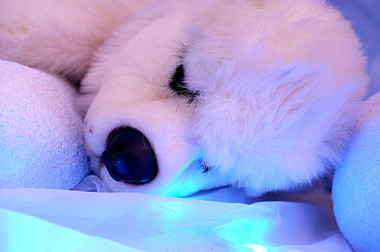 Lying Polar Bear