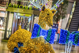 Reindeer Photo Opportunity