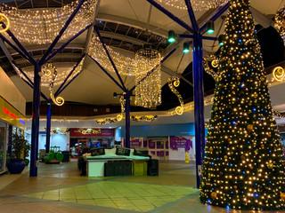 Market Square Cone Tree