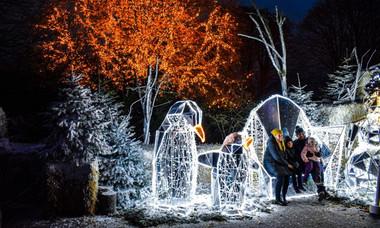 A Zoo Arctic Christmas