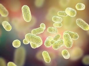 microbiote.png