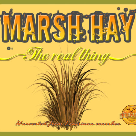 """Our new """"Natural-grass""""(TM)"""" to change the grass mat industry"""